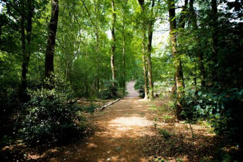 A forrest path